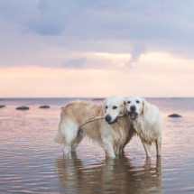 Boston and Saara by the sea