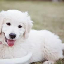 Puppy Saara