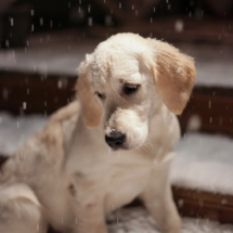 Must Love Snow!